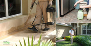 Get robust pest control services in Bangalore at TechSquadTeam