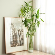Houseplants for Your Bathro